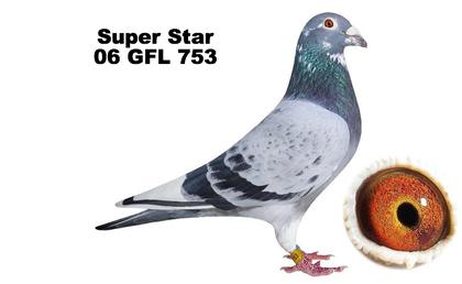 KJ Racing Pigeons - Top USA Pigeons